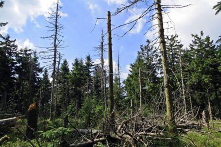 Zukunftsforum Naturschutz 2021: Symbolbild Waldsterben